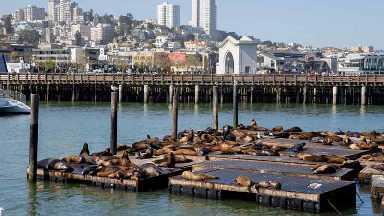 Activités et excursions à San Francisco