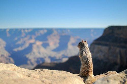 Whaou le Grand Canyon !