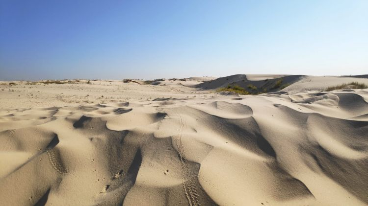 monahans-sandhills