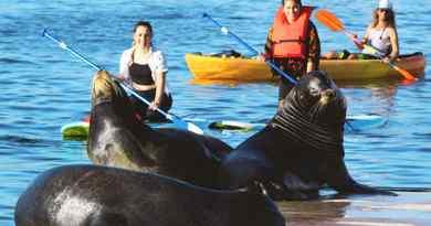 Tour de kayak et paddleboard avec les lions de mer