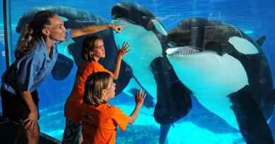 Billet SeaWorld San Diego – Coupe-file à l'entrée