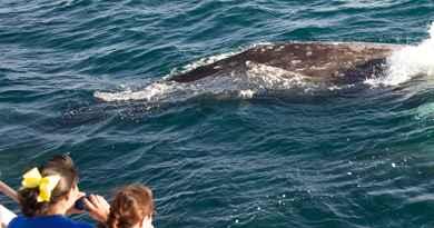 Croisière d'observation des baleines et dauphins