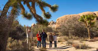 Excursion au parc national de Joshua Tree